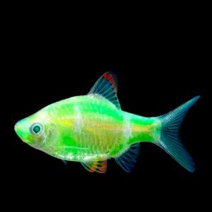 флуоресцентные (светящиеся)