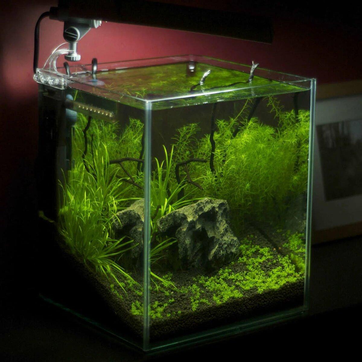 день рожденья растения для нано аквариумов фото традиционная