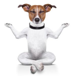 Ликвидаторы запаха для собак