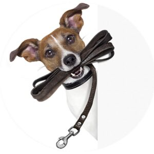Аксессуары для собак