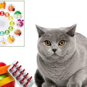 Витамины для кошек и котят