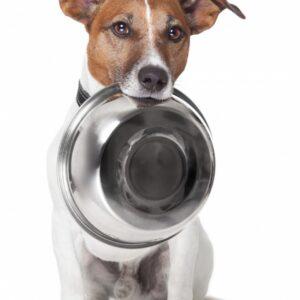 Миски/поилки для собак