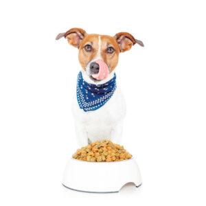 Корма сухие для собак