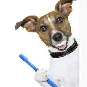 Средства для ухода/гигиена собак