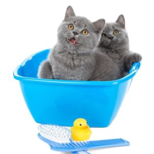 Уход за котятами