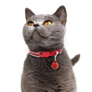 Ошейники для кошек