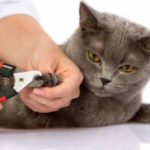 Когтерезы для кошек