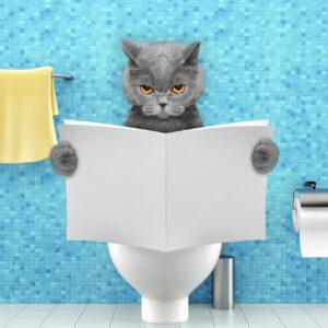 Наполнители для кошек