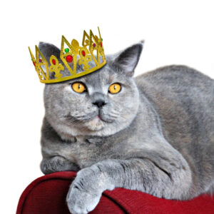 Аксессуары для кошек